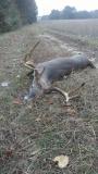 North Carolina buck shot from a Rack Shack